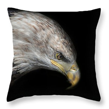 Juvenile Bald Eagle Portrait Throw Pillow