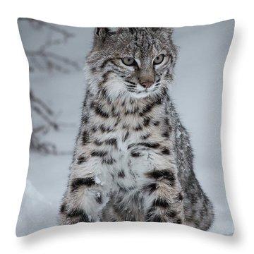 Juvenile Bobcat In The Snow Throw Pillow