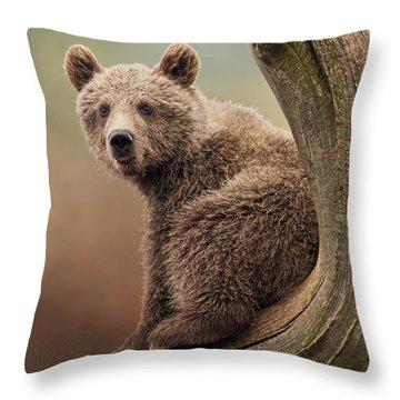 Juvenile Brown Bear - 365-5 Throw Pillow