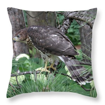 Juvenile Cooper's Hawk Throw Pillow