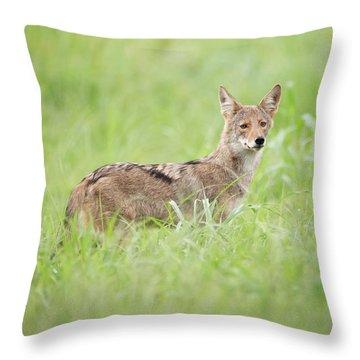 Juvenile Coyote Throw Pillow