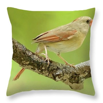Juvenile, Female Cardinal, Animal Portrait Throw Pillow