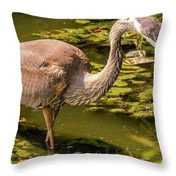 Juvenile Great Blue Heron Throw Pillow