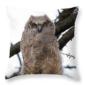Juvenile Great Horned Owl Throw Pillow