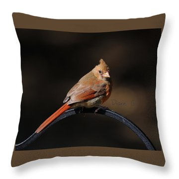 Juvenile Male Cardinal Throw Pillow by Diane Giurco