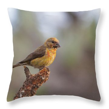 Juvenile Male Red Crossbill Throw Pillow