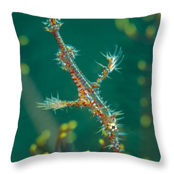 Juvenile Ornate Ghost Pipefish Throw Pillow