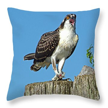 Juvenile Osprey#1 Throw Pillow by Geraldine DeBoer