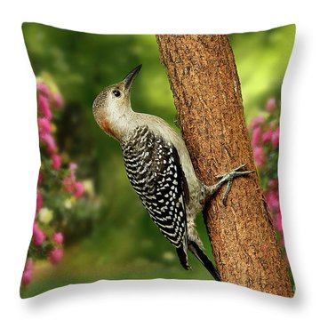Throw Pillow featuring the photograph Juvenile Red Bellied Woodpecker by Darren Fisher