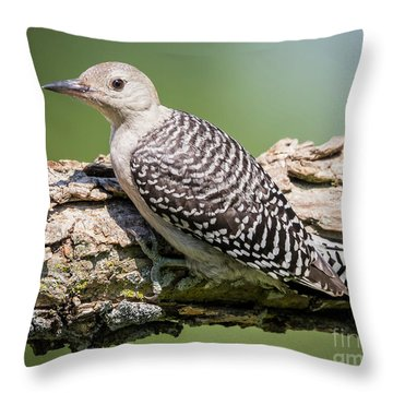 Juvenile Red-bellied Woodpecker Throw Pillow