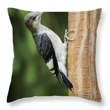 Throw Pillow featuring the photograph Juvenile Red Headed Woodpecker by Ricky L Jones