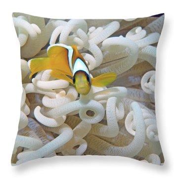 Juvenile Red Sea Clownfish, Eilat, Israel 3 Throw Pillow