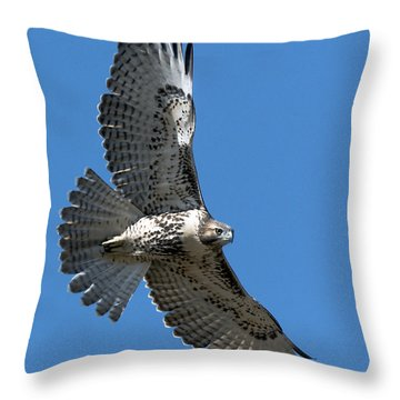 Juvenile Red-tailed Hawk At Riverside Cemetery Throw Pillow