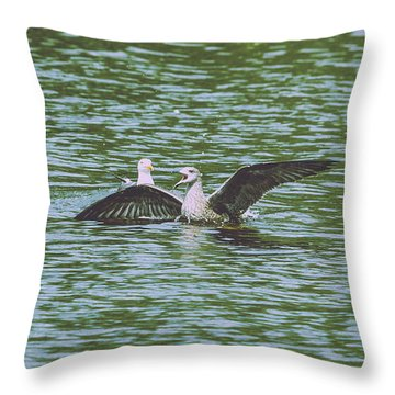 Throw Pillow featuring the photograph Juvenile Seagull In A Water by Jacek Wojnarowski