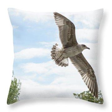 Throw Pillow featuring the photograph Juvenile Seagull In Flight by Jacek Wojnarowski