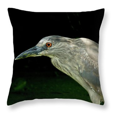 Juvey Throw Pillow by Kimo Fernandez