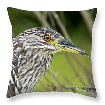 Juvi Black-crowned Night Heron Throw Pillow