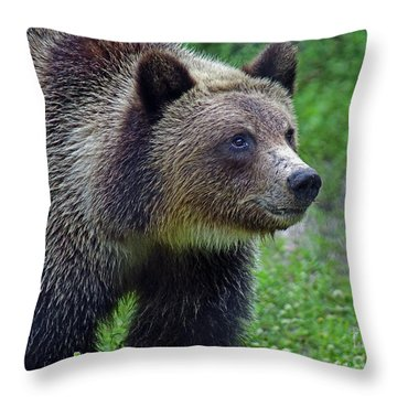 Juvie Grizzly Throw Pillow