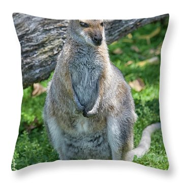 Throw Pillow featuring the photograph Kangaroo by Patricia Hofmeester