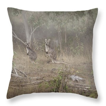 Kangaroos In The Mist Throw Pillow by Az Jackson