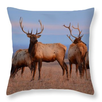 Kansas Elk 2 Throw Pillow