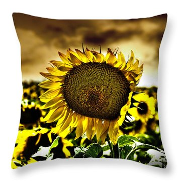 Kansas Sunflower Throw Pillow by Jeremy Martinson