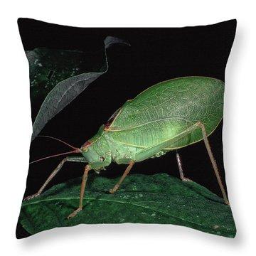 Katydid At Night Throw Pillow