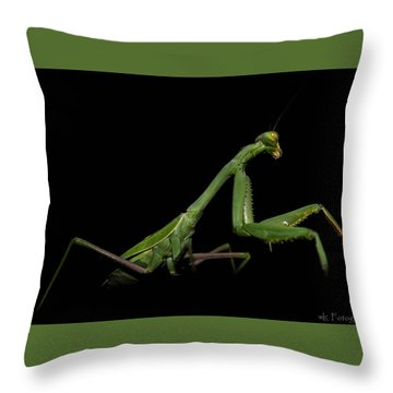 Katydid In Black Throw Pillow