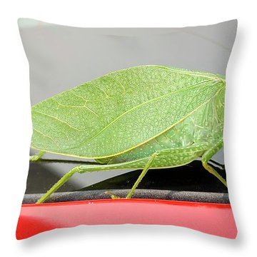Katydids- Bush Crickets Throw Pillow