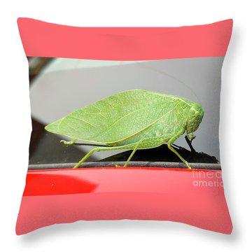 Katydids- Bush Crickets Throw Pillow