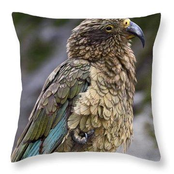 Throw Pillow featuring the photograph Kea Bird by Sally Weigand
