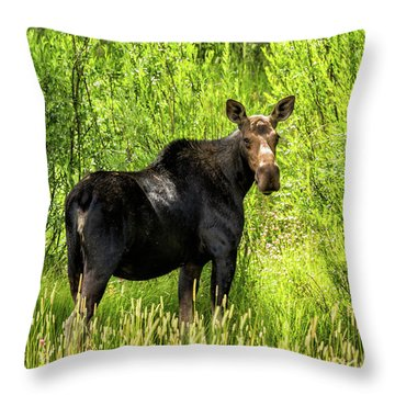 Keep Your Distance Wildlife Art By Kaylyn Franks Throw Pillow