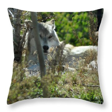 Keeping Watch Throw Pillow by Diane E Berry