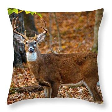 Kentucky Eight #2 Throw Pillow