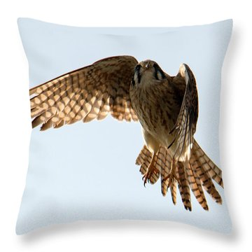 Throw Pillow featuring the photograph Kestrel Hover by Mike Dawson