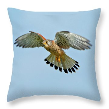 Kestrel In The Wind . Throw Pillow