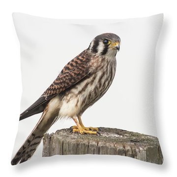 Kestrel Portrait Throw Pillow by Robert Frederick