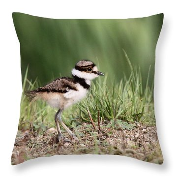 Killdeer - 24 Hours Old Throw Pillow by Travis Truelove