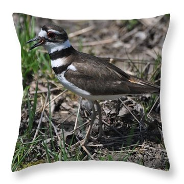 Killdeer Guarding Her Eggs Throw Pillow