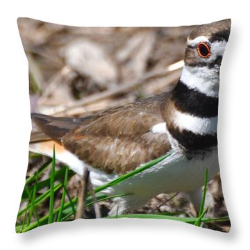 Killdeer Mother Throw Pillow