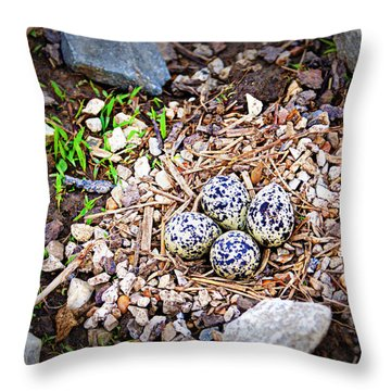 Killdeer Nest Throw Pillow by Cricket Hackmann