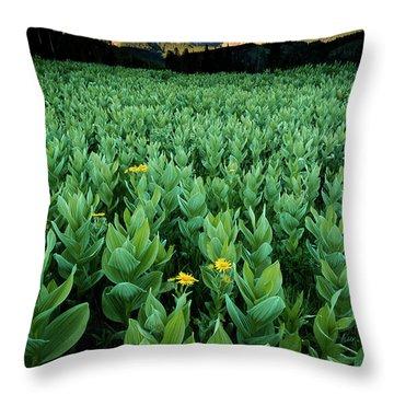 Kilpacker Basin Throw Pillow