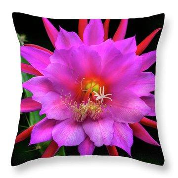 Kimnach's Pink Orchid Cactus Throw Pillow