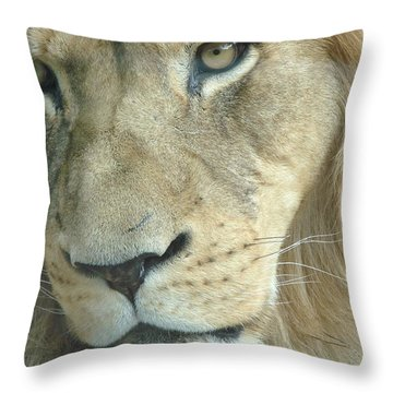 Throw Pillow featuring the photograph King by Margaret Bobb