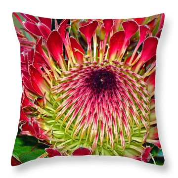 King Protea Throw Pillow by Michael Durst