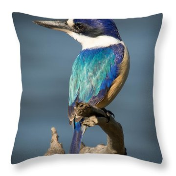 Kingfisher 3 Throw Pillow
