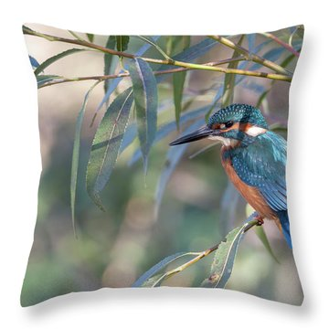 Kingfisher In Willow Throw Pillow