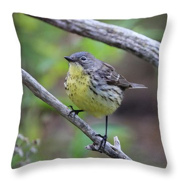 Kirtland's Warbler Throw Pillow
