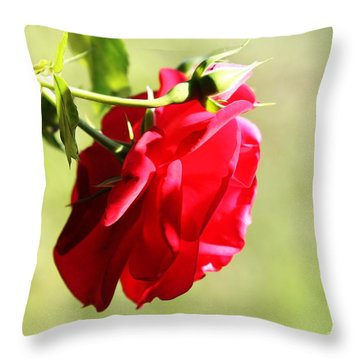 Throw Pillow featuring the photograph Kissed By The Sun by Gabriella Weninger - David