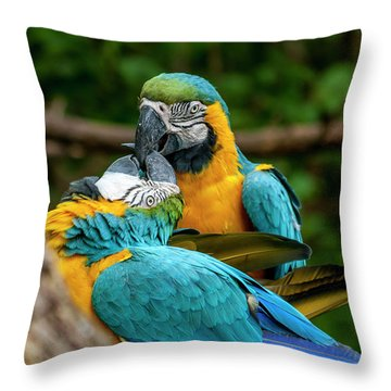 Kissing Parots Throw Pillow